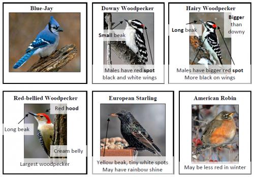 bird.guide.snapshot